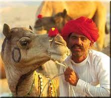 camel-breeding farm