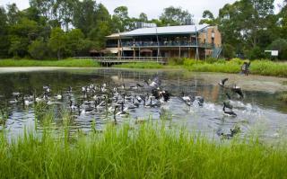 Image of Hunter Wetlands Centre