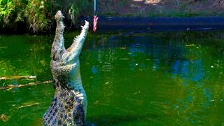 Crocodylus Park And Zoo