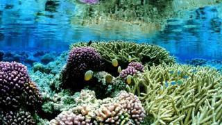 Hikkaduwa Coral Garden
