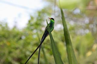 Barneys Humming Bird Garden