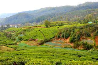 Bluefield Tea Gardens