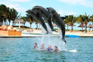 Delphinus Dreams Cancun