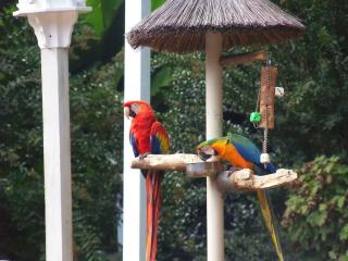 parrot mountain and gardens
