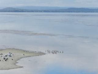 Tuggerah Lake