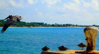 Bollard Bay