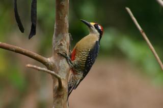 Early Bird Watching Tour