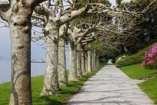 villa serbelloni gardens