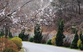 Jinlong Temple Forest Park