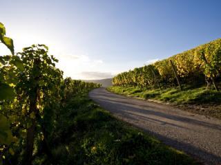 Trier Wine Culture Trail