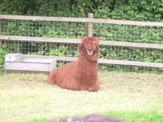Hazlehead Pet Corner