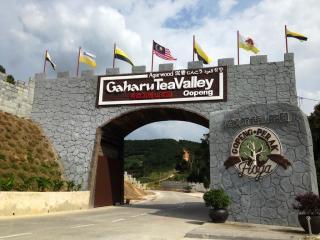 gaharu tea valley