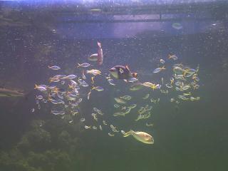 Green Connection Aquarium