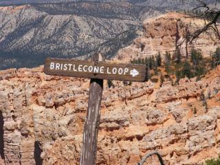 Bristlecone Loop
