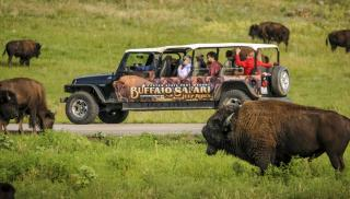 Buffalo Safari Jeep Tour