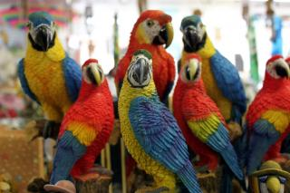 the birdstand