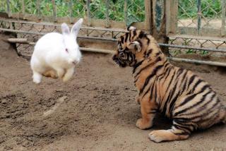Qingdao Animal World