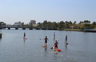 three brothers boards dolphin & manatee paddle board tours