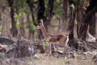 Image of Gajner Wildlife Sanctuary