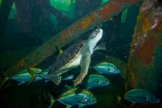 Aracaju Aquarium