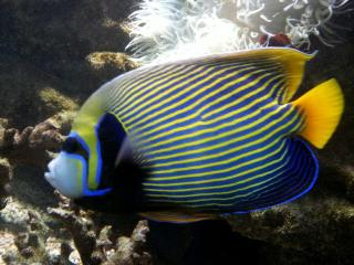 Aquario Vasco Da Gama