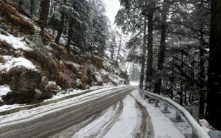 Shimla Reserve Forest Sanctuary