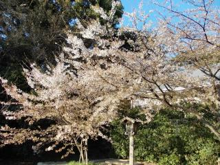 Maizuru Park And Fukuoka Castle Remains