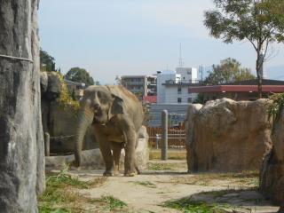 Fukuoka Municipal Zoo And Botanical Garden