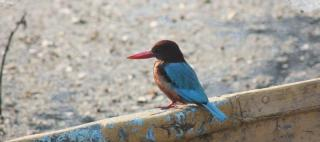 Sur Sarovar Wild Life Sanctuary