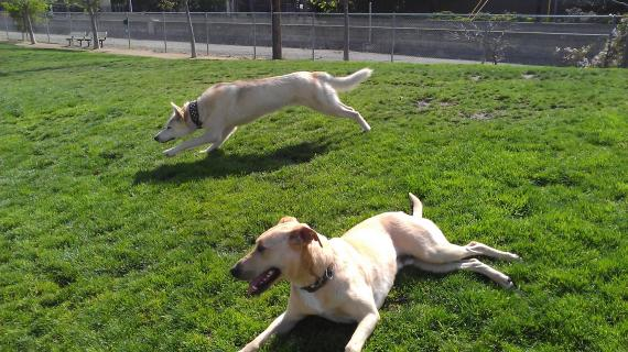 Reed Street Dog Park Santa Clara Reviews Ticket Price