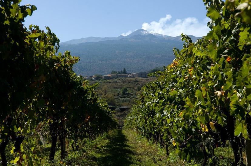 Etna And Wine - Catania