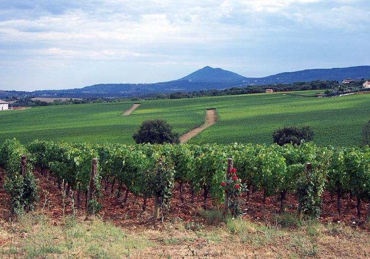 500 Vintage Tour Along Val D'Orcia  Roads With Picnic Lunch - Montalcino