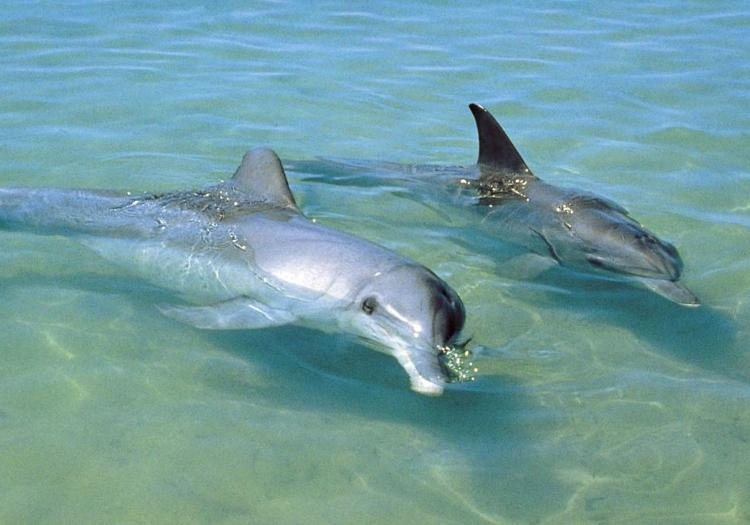 Private Tour To Port Stephens First Class Nature Experiences With Dolphins And Kangaroos - Sydney