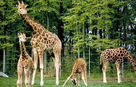 bio kbh zoo billund