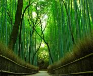 Kyoto Itinerary 7 Days
