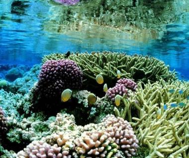 Hikkaduwa Coral Garden Galle Ticket Price Timings