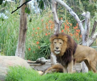 Perth Zoo Tours