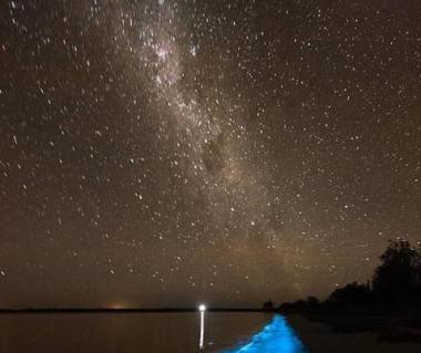 Bioluminescent Bay Tours