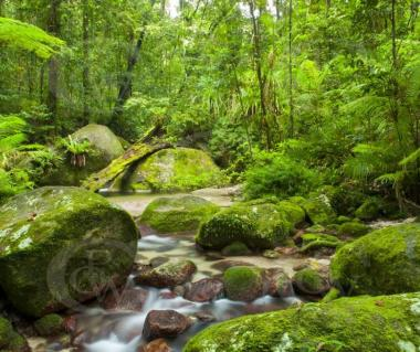 Daintree Rainforest Tours