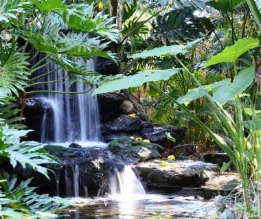 Marie Selby Botanical Gardens Tours