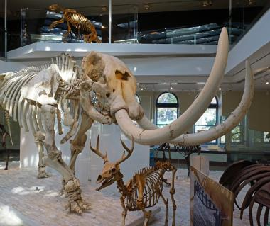 Natural History Museum Of Los Angeles County Tours