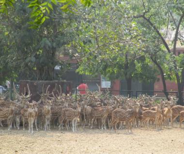 Jaipur Zoo Tours