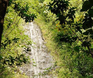Manoa Falls Tours