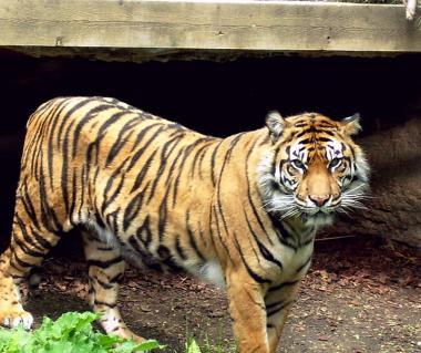 Toronto Zoo Tours