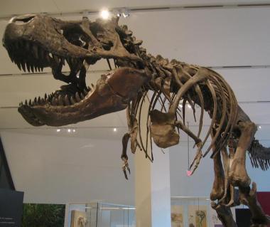 Royal Ontario Museum Tours