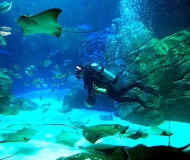 Ripley's Aquarium Of Canada Tours