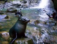 Ohau Waterfall Walk And Stream Walk