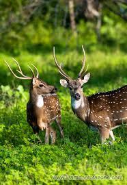 Yala National Park Image