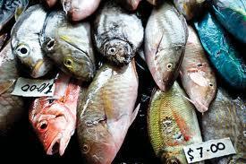 World Fish Centre Image