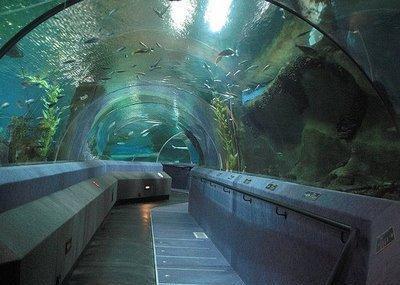 National Aquarium Of New Zealand, Napier